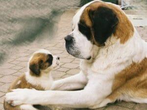 El calcio en perros adultos y cachorros