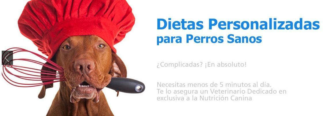 dietas-caseras-personalizadas-perros-sanos