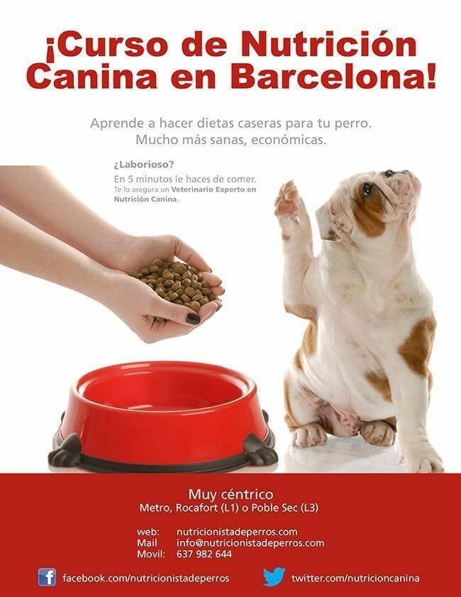 CartelCursosBarcelona