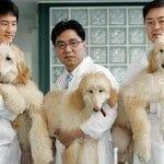 perro cientificos clonación