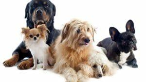 Las ocho razas de perros que necesitan menos ejercicio