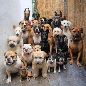 Las siete razas de perros para personas alérgicas