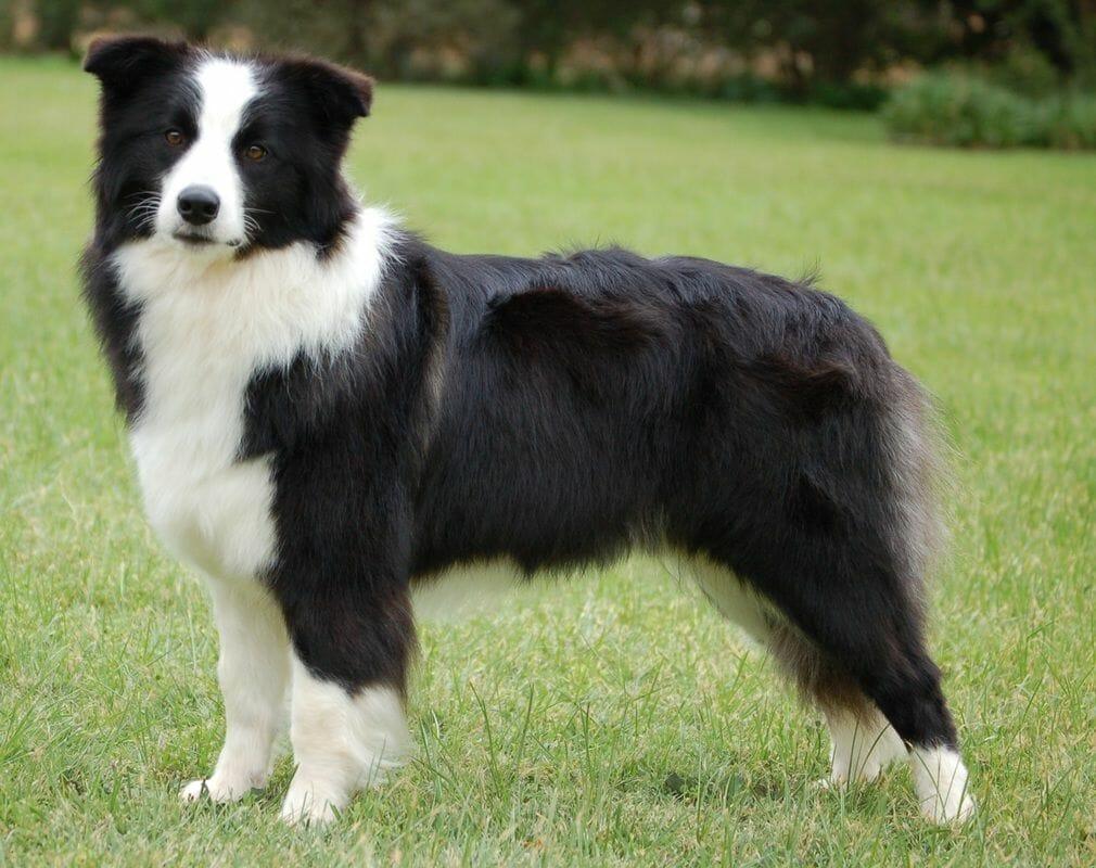 Canicross Dog Breeds