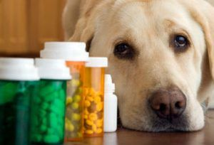 La mitad de todos los envenenamientos son por estos fármacos