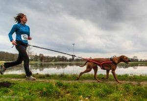 Las mejores razas de perros para corredores