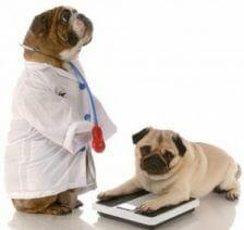 Obesidad-perros