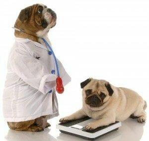 Problemas ortopédicos que desarrollará tu perro: toma estas medidas preventivas