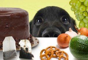 """Verdades en la nutrición del perro (40): Los alimentos """"prohibidos"""""""