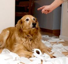 perro culpa
