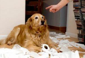 Mamá yo no fui. ¿Sienten culpa los perros?