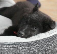 cama-cancerigena-perro
