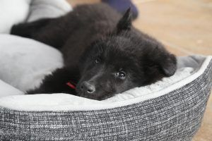 ¿Dónde duerme tu perro? Puede ser cancerígeno ¿Lo sabías?
