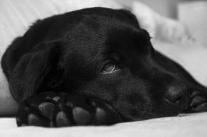 No hay nada más qué hacer por tu perro. Qué hacer cuando tu veterinario te dice esto