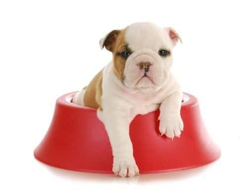 alimento y comida del perro cachorro de 1 a 2 meses. 7 consejos clave