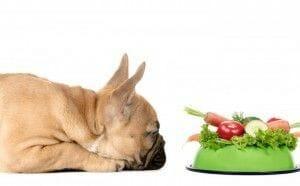 La nutrición, parte integral de la consulta veterinaria según la WSAVA y AAHA