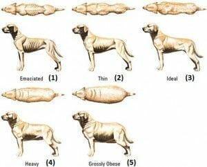 ¿Cómo saber si mi perro está obeso? Y otras preguntas frecuentes