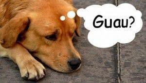 Los perros ladran por comida, entre otras razones