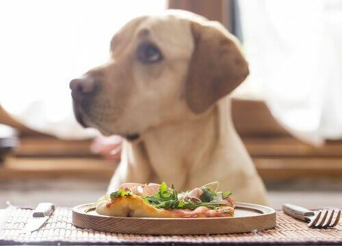 perro comiendo dieta natural