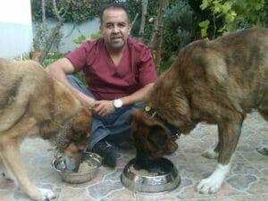 La comida del perro. La base para una vida sana.