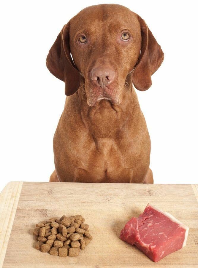 mejor alimento para adelgazar bulldog ingles