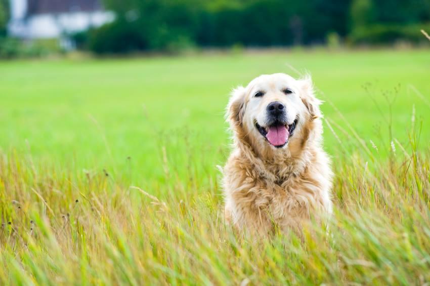perro nutrición ortomolecular
