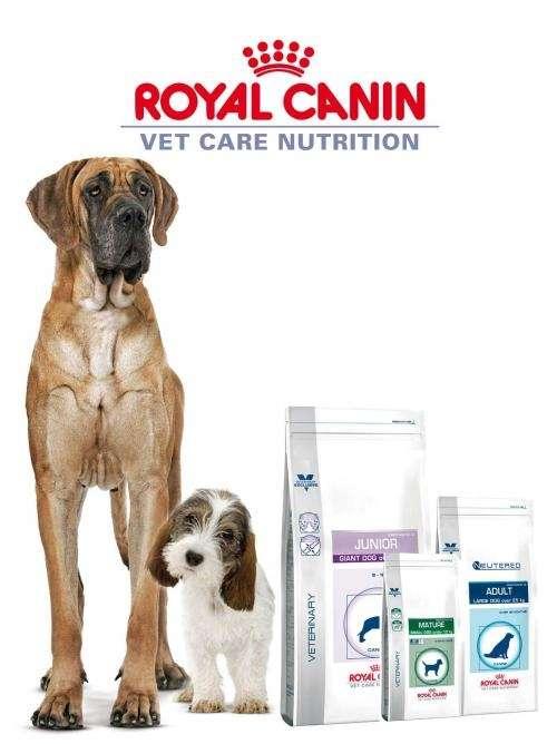 perro alimento royal canin distintas razas
