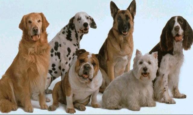 perros alimentos distintas razas