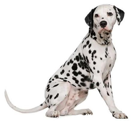 Pienso perros oxalato calcico
