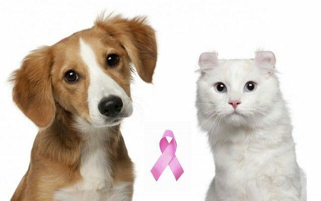 próstata en perros vs gatos