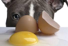 perro huevo