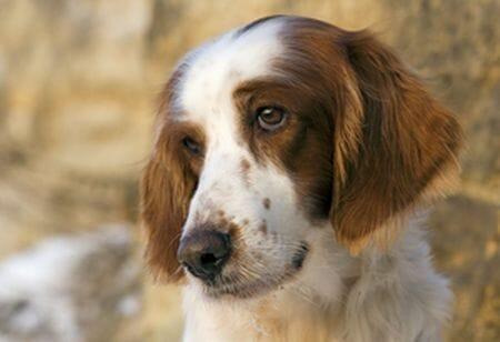 perro2