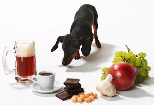 Alimentos prohibidos para perros. Mentiras.