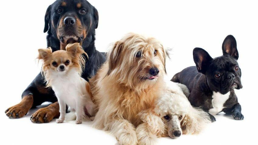 Las ocho razas de perros que necesitan menos ejercicio - Es malo banar mucho a los perros ...