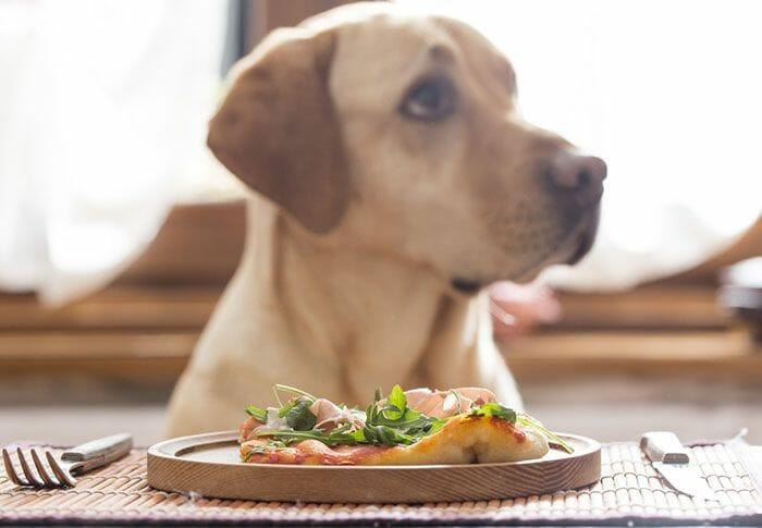 comida apta para consumo humano pobre para el perro