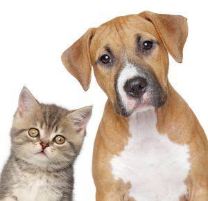 Verdades en la nutrición del perro (49): La regulación alimentaria no favorece la salud de tu mascota