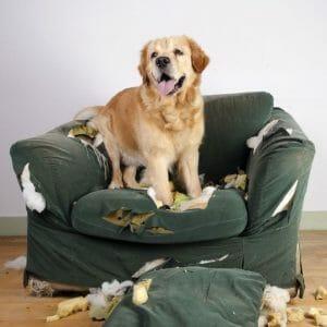 Mi perro es un destructor, lame paredes, come piedras, excrementos…