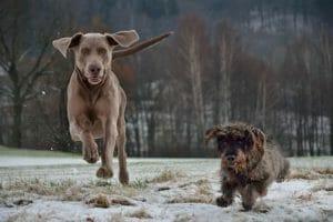 Verdades en la nutrición del perro (54): No pagues por la imagen