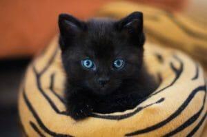 El gato. Nutrición y comportamiento (1): La importancia de morder en los gatitos