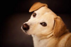 Verdades en la nutrición del perro (55): Una confesión
