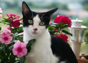 El gato. Nutrición y comportamiento (3): La proteína en los gatos. Mitos y realidades