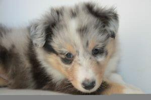 ¿Tienes un nuevo perro en casa? Ten en cuenta estos 10 consejos