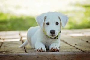Todo lo que necesitas saber sobre la nutrición del cachorro (vídeo)