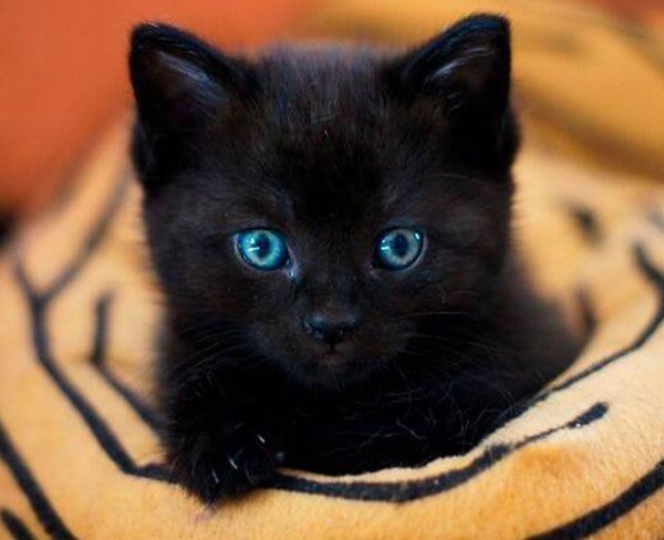 cute-gato-600x450