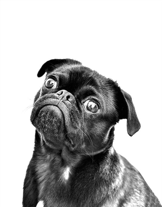 perro-mirando