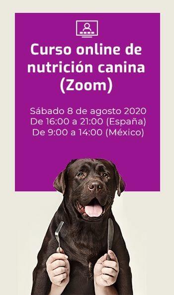Mejor marca de comida para perro